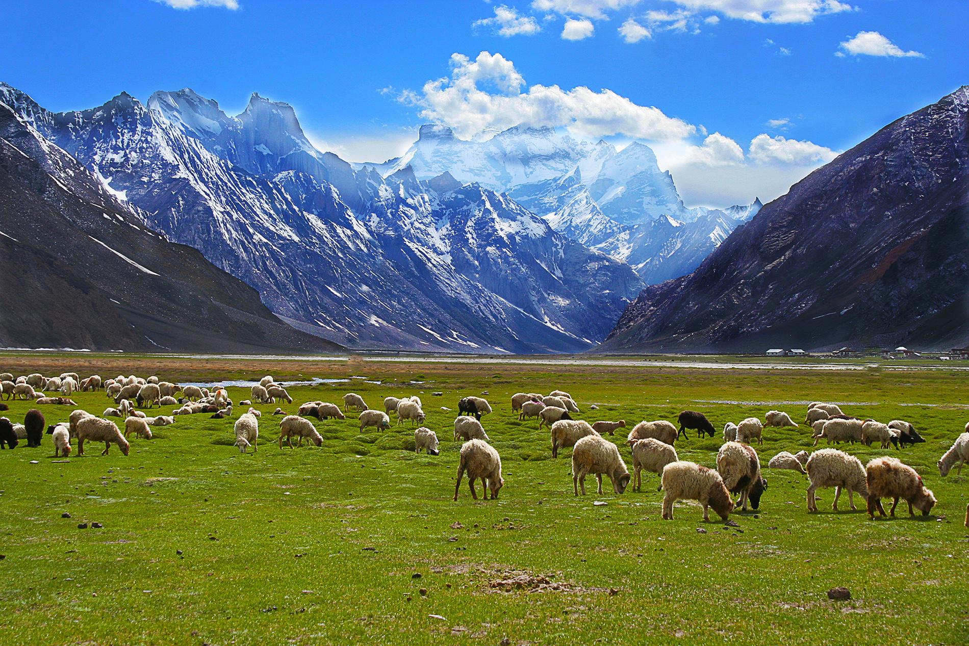 Leh Ladakh Road Trip Zanskar
