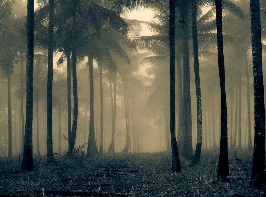 camping destinations in India - Coorg