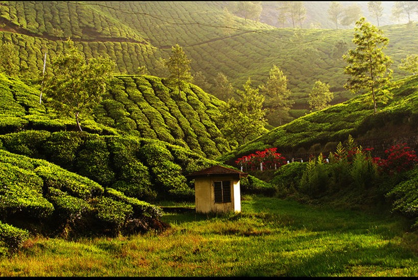 munnar - famous destinations in India and foreign look-alikes